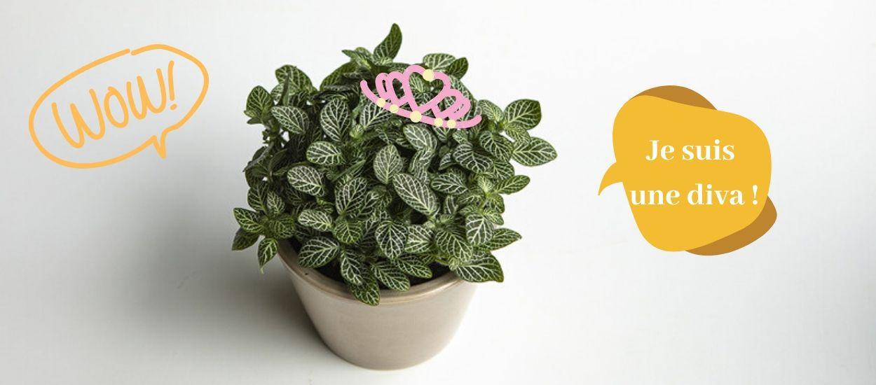 Cette plante drama queen fait sembler de mourir quand elle a soif