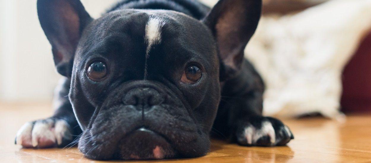 La SPA se mobilise contre l'abandon des animaux pendant l'épidémie et donne ses consignes