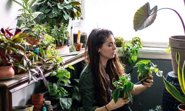 Pourquoi les Millennials sont-ils autant obsédés par les plantes ?