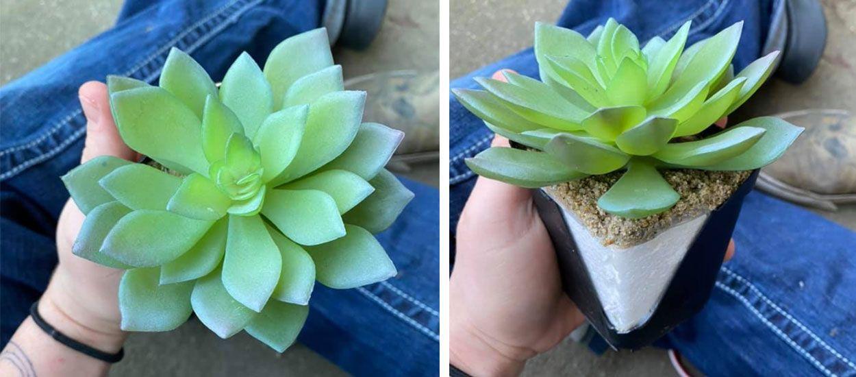 Après deux ans d'entretien, elle se rend compte que sa plante verte est en plastique !