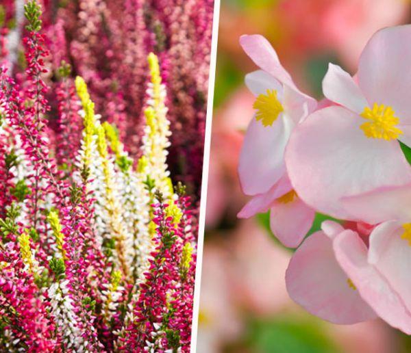 Ces plantes sont parfaitement adaptées à un jardin ombragé