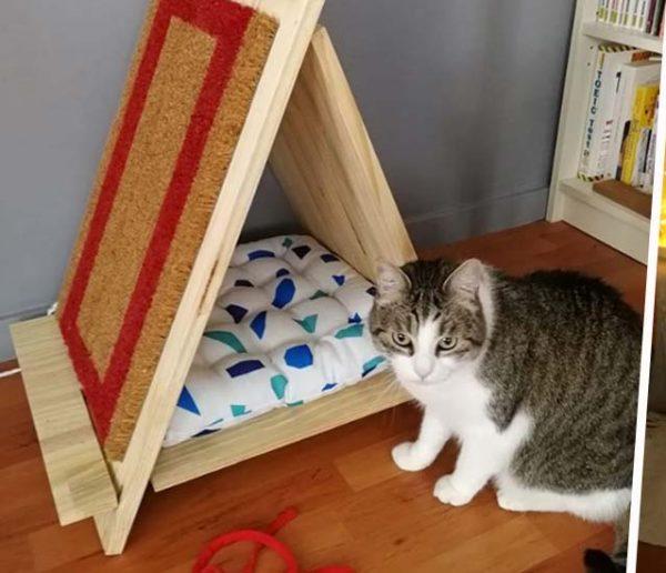 jeu-pour-chat