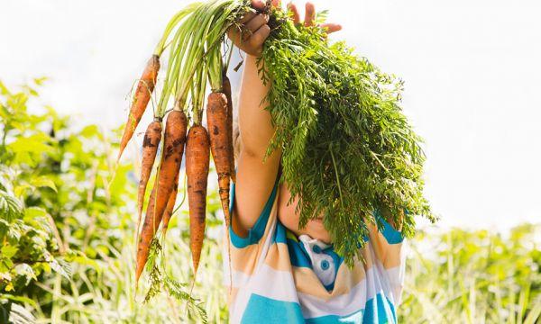 Suivez des cours de jardinage gratuits toute la semaine sur Internet