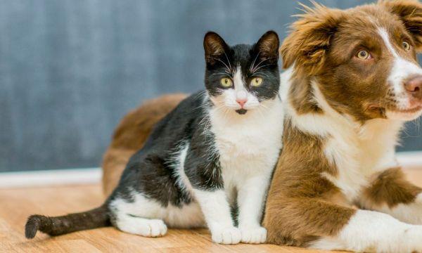 Vous pouvez maintenant adopter un animal à la SPA pendant le confinement