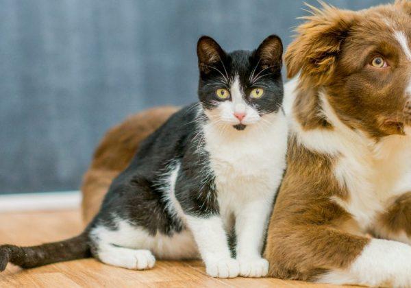 Voici Comment Adopter Un Animal A La Spa Pendant Le Confinement