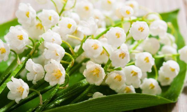 Le Collectif de la Fleur Française organise une collecte pour livrer du muguet aux personnes âgées