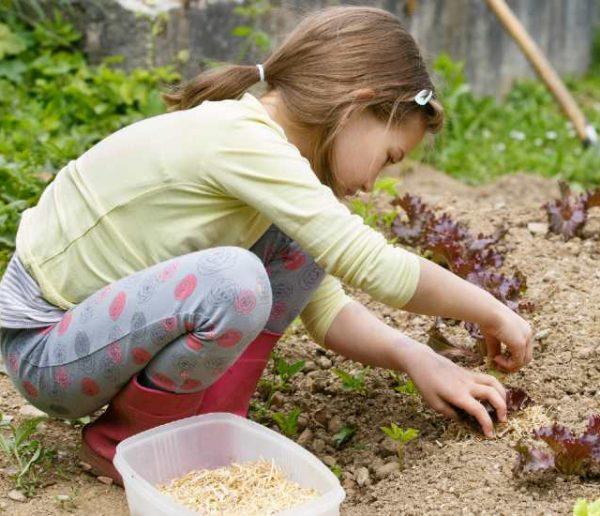 Voici quoi planter dans votre jardin (ou votre jardinière) pour le récolter très rapidement
