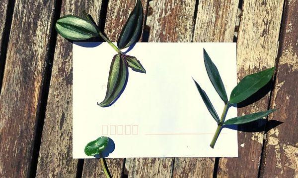 Comment envoyer des boutures par courrier pour offrir des plantes ?
