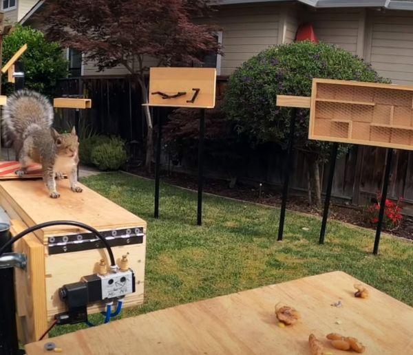 Il fabrique un parcours d'obstacles pour les écureuils dans son jardin