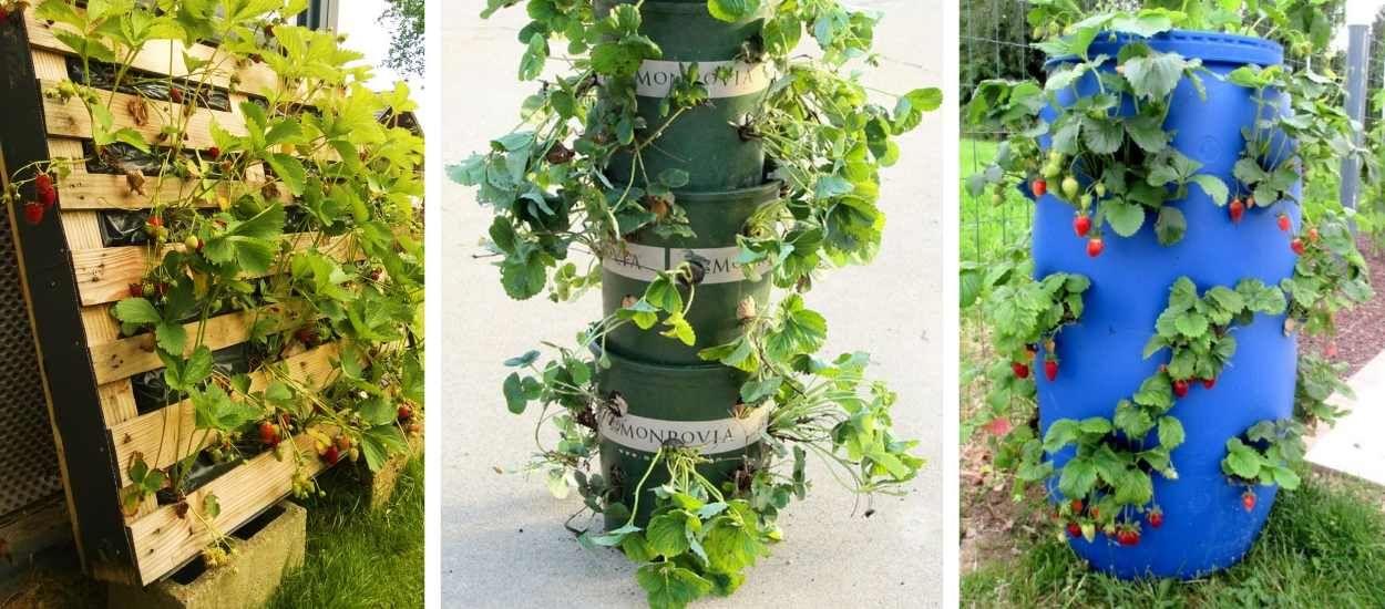 Les 10 meilleures idées gain de place pour cultiver des fraises