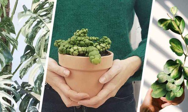 Ces plantes d'intérieur originales que vous ne verrez pas chez les autres