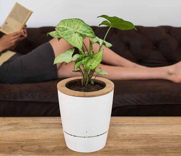 Grâce à ce pot de fleurs, vos plantes