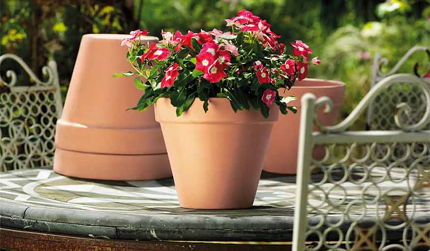 Beginner's Guide to Sowing Flowers Successfully