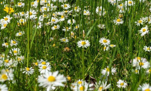 Dilemme : comment tondre sa pelouse ET respecter la biodiversité ?