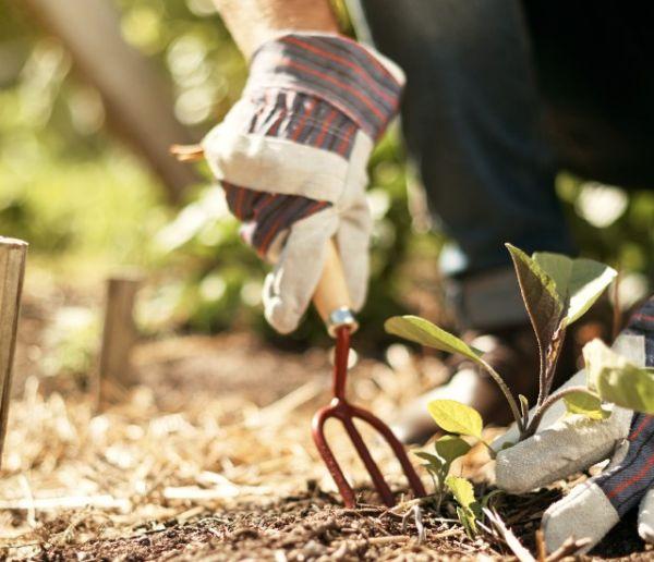 11 façons de faire un engrais naturel pour votre jardin