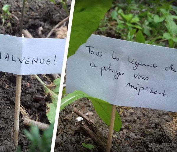 Ce jardinier amateur a testé une nouvelle technique (pleine d'humour) pour éloigner les escargots