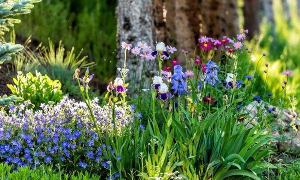 Voici comment semer des fleurs avec succès (même quand on est débutant)