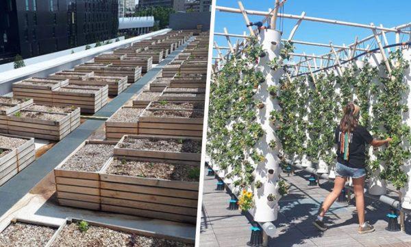 À Paris, vous pouvez louer un potager dans la plus grande ferme urbaine sur toit d'Europe