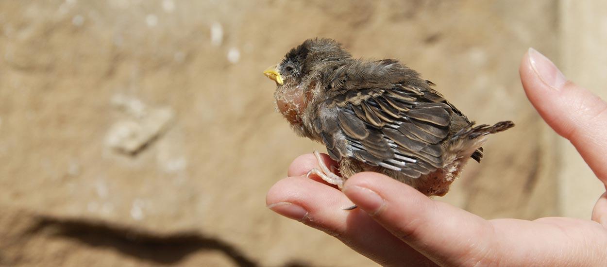 Vous trouvez un bébé animal blessé dans votre jardin : comment le soigner ?