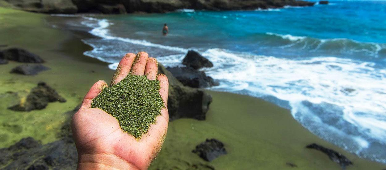 Une ONG va faire des plages de sable vert pour capturer la pollution aux Caraïbes