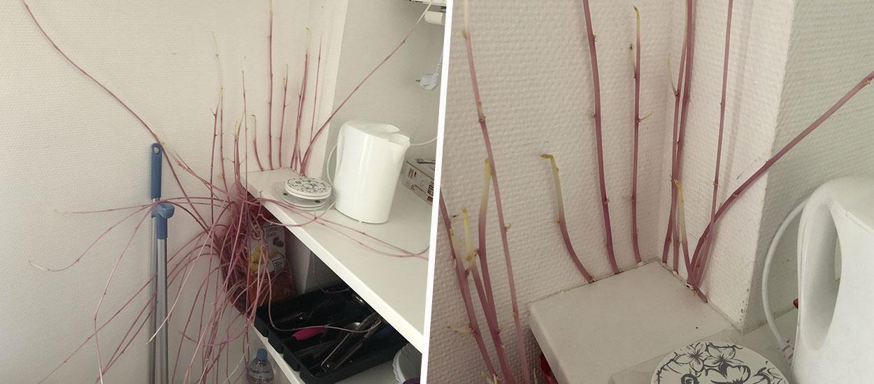 Après trois mois d'absence, son appartement est envahi par les racines de pommes de terre