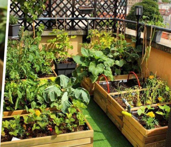 Cultiver un vrai potager sur son balcon : l'exemple inspirant d'une jardinière débutante