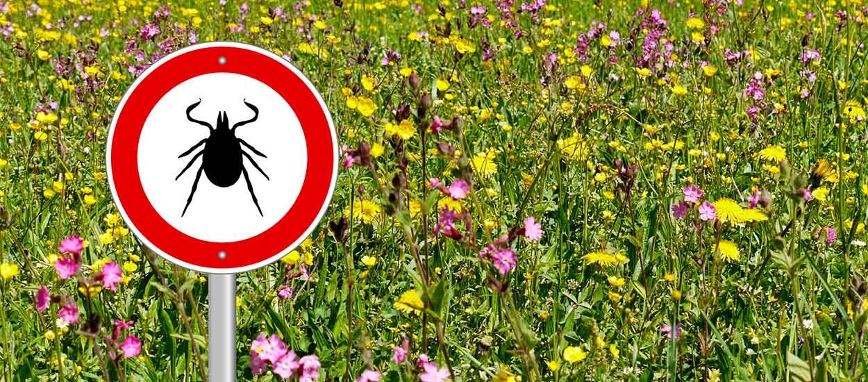 Comment vous protéger des tiques dans votre jardin ?