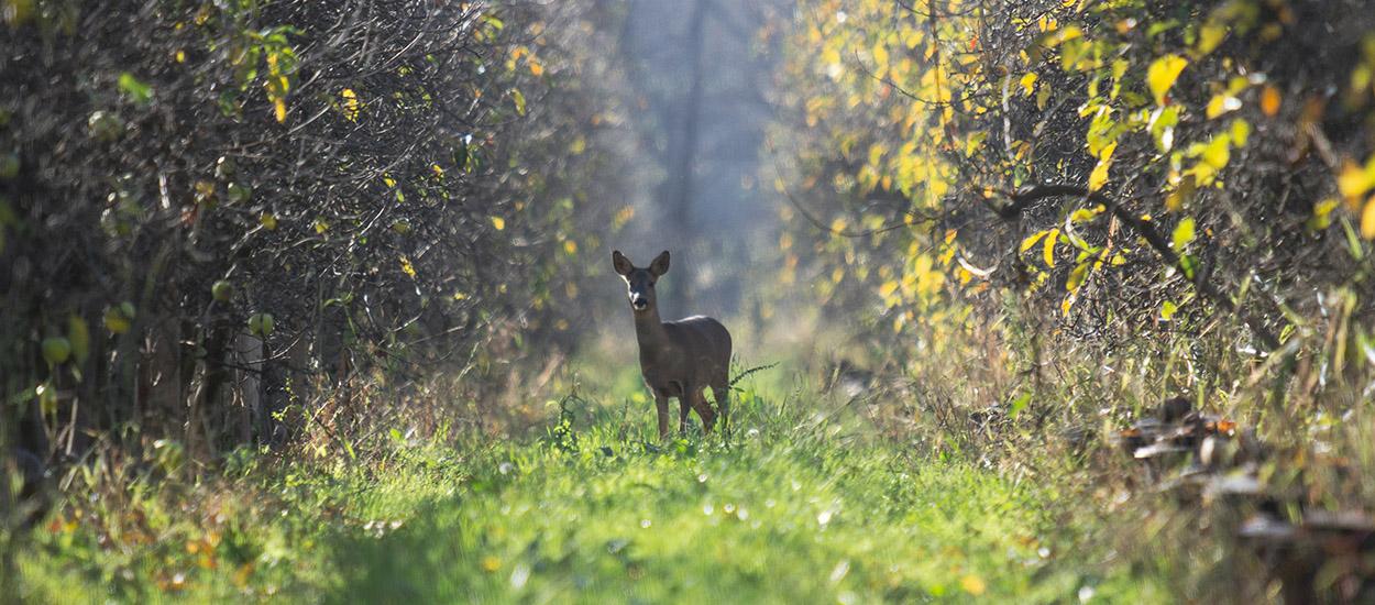 Ces animaux à redécouvrir près de chez soi : Entretien autour de la