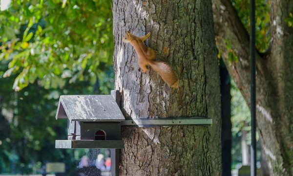 5 abris en bois à construire pour les animaux et insectes du jardin