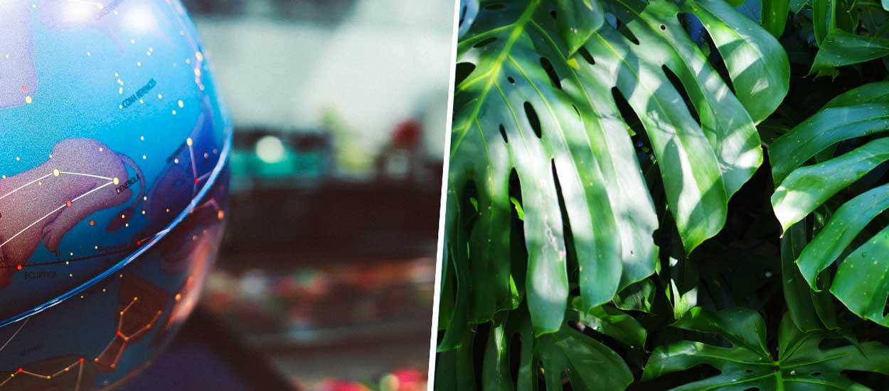 Quelle plante verte correspond à votre signe astrologique ?