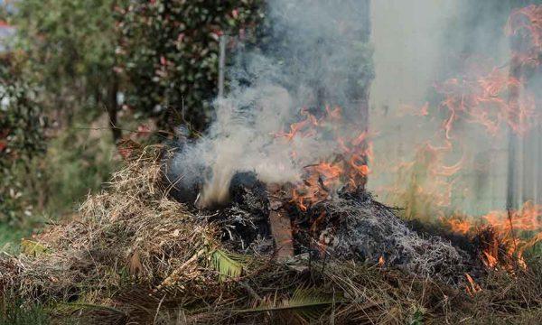 Quelles sont les alternatives écolo pour éviter de brûler ses déchets verts ?
