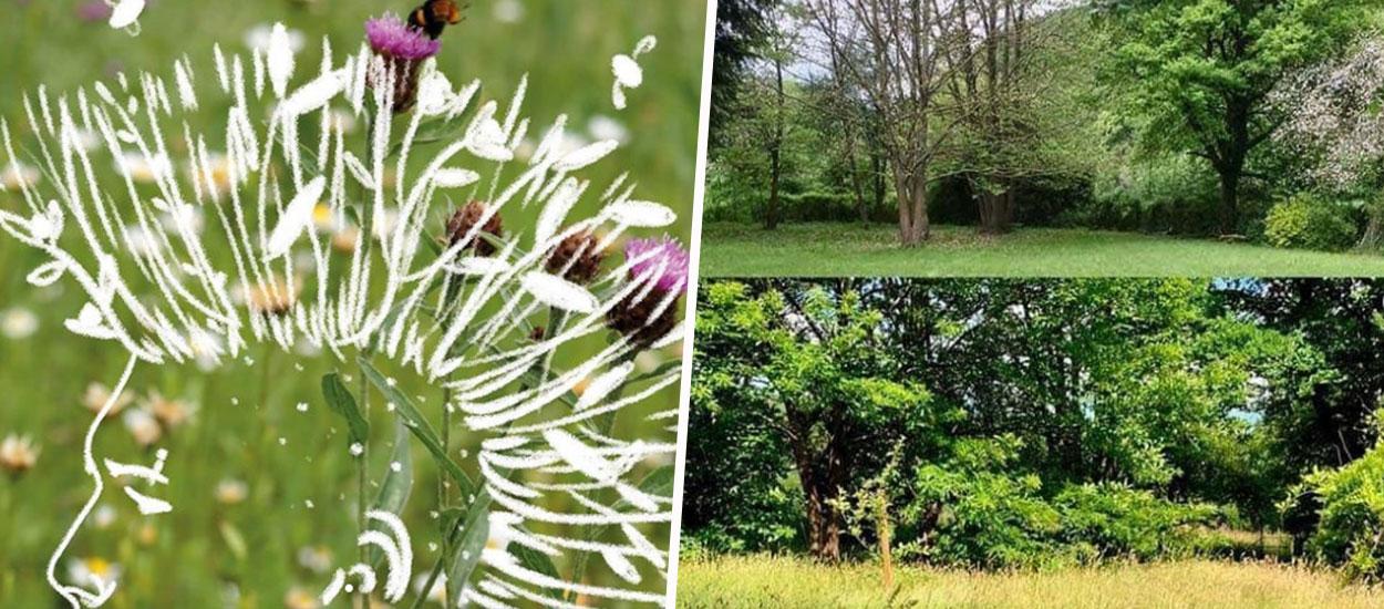 #JardinPunkChallenge : cet été, arrêtez de tondre vos pelouses pour protéger la faune !