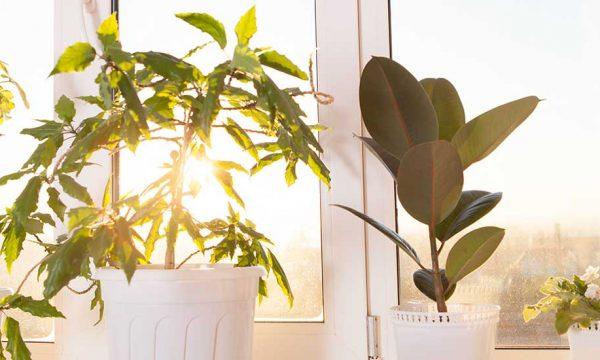En été, vos plantes vertes aussi peuvent attraper des coups de soleil