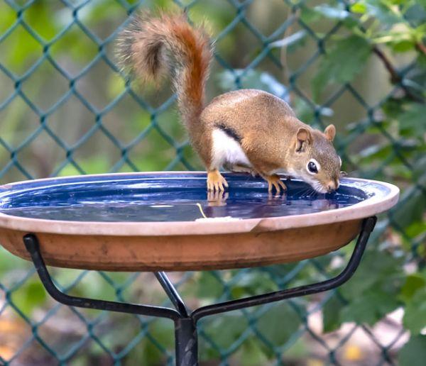 Voici comment donner à boire aux animaux sauvages autour de votre maison quand il fait chaud