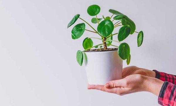 5 plantes d'intérieur trop faciles à bouturer (même pour les nuls)