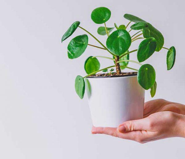 Passion plantes vertes