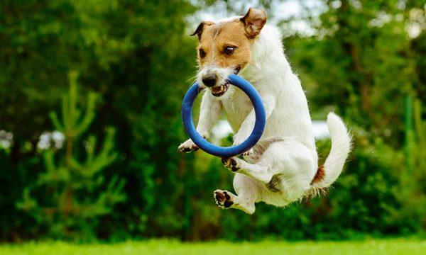 6 idées de jeux DIY à fabriquer pour amuser votre chien