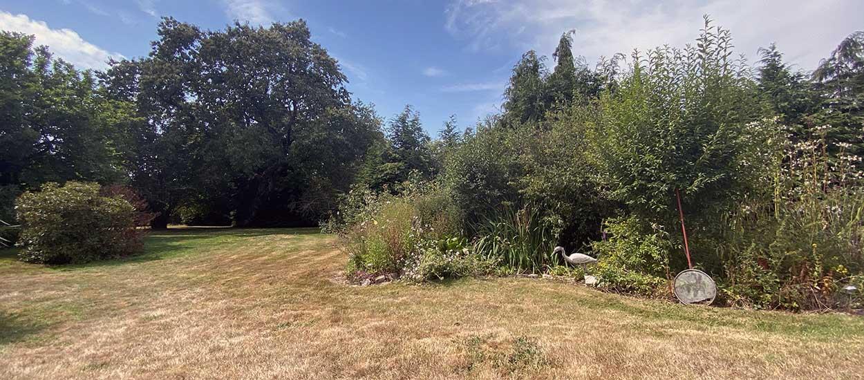 Sécheresse : peut-on arroser son jardin en période de canicule ?