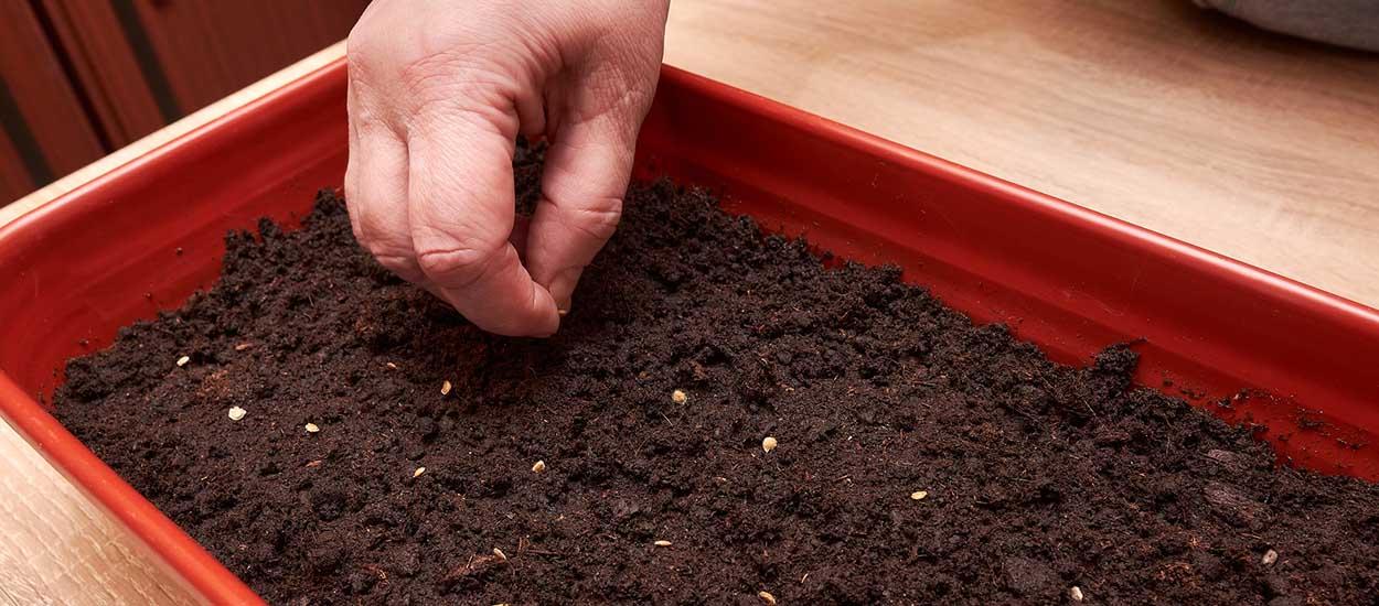 Peut-on semer des graines même si ça n'est pas la saison ?