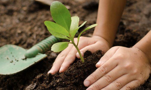Apprenez à planter une mini forêt près de chez vous grâce à cette formation en ligne