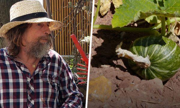 Pascal Poot fait pousser des tomates sans eau malgré la sécheresse grâce aux semences paysannes