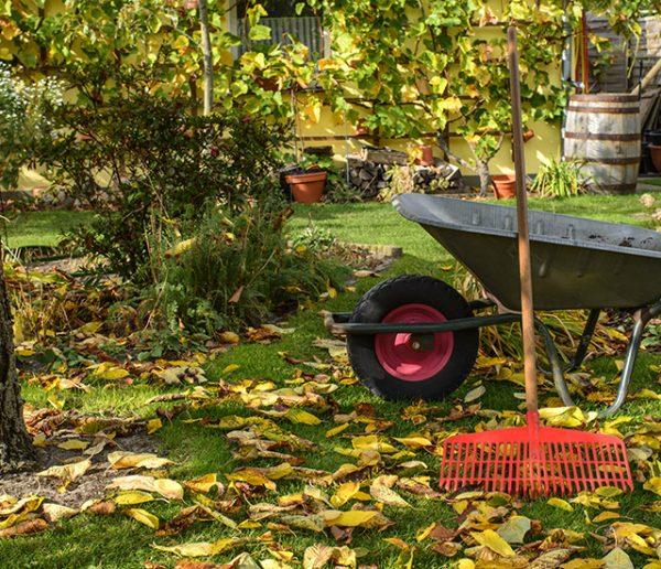 Pourquoi planter en automne est-il plus écolo et plus économique ?