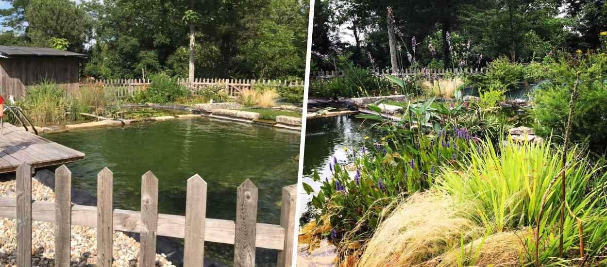 Découvrez comment ils ont construit eux-mêmes cette magnifique piscine naturelle dans leur jardin