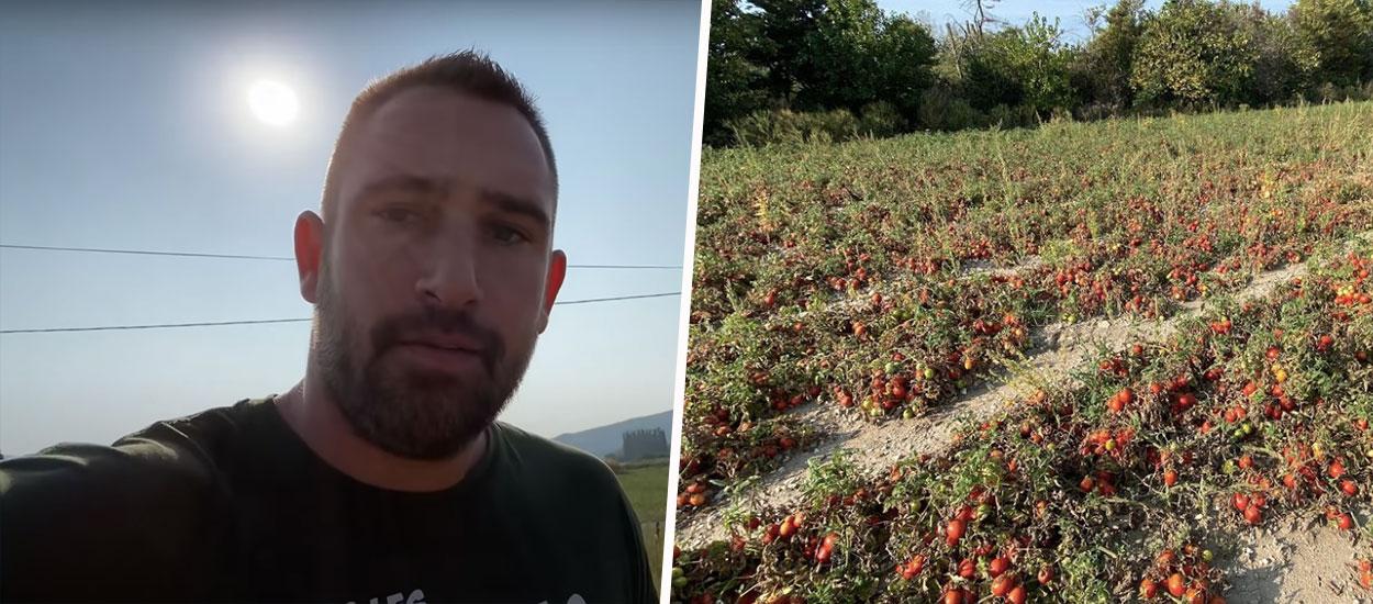 Cet agriculteur a donné 30 tonnes de tomates à des particuliers pour éviter de les jeter