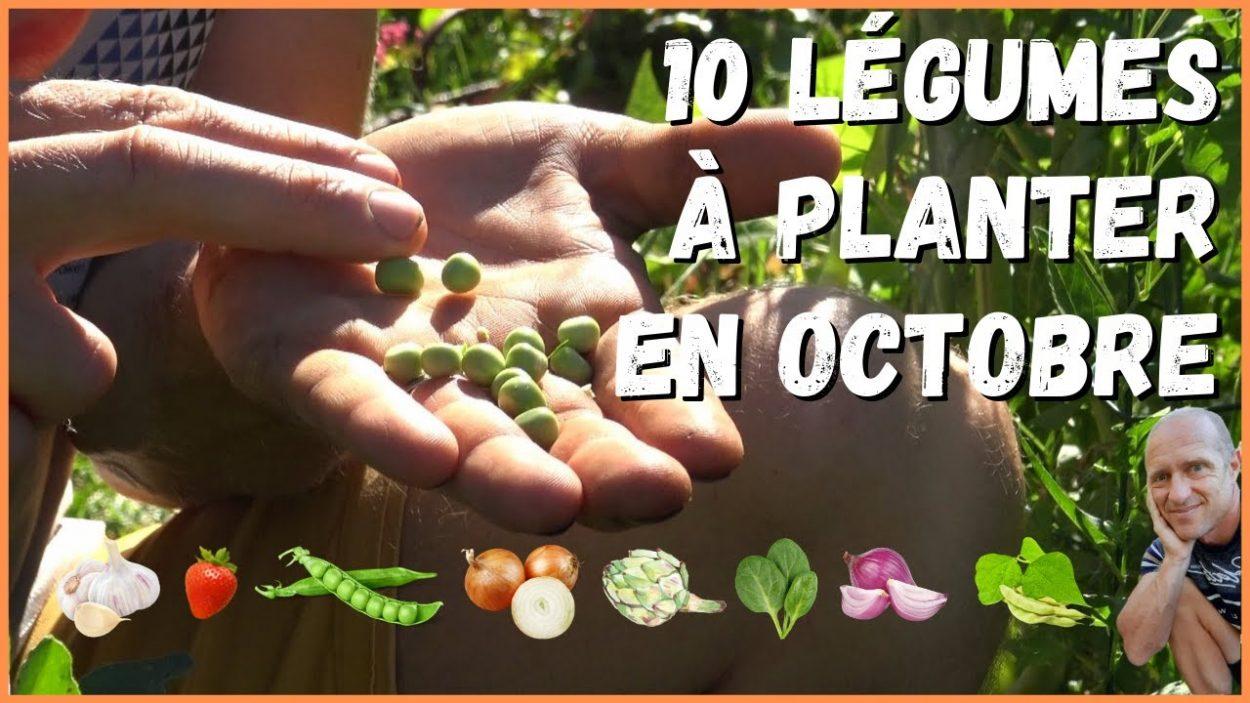 Quels légumes peut-on planter au mois d'octobre ? La réponse en vidéo !