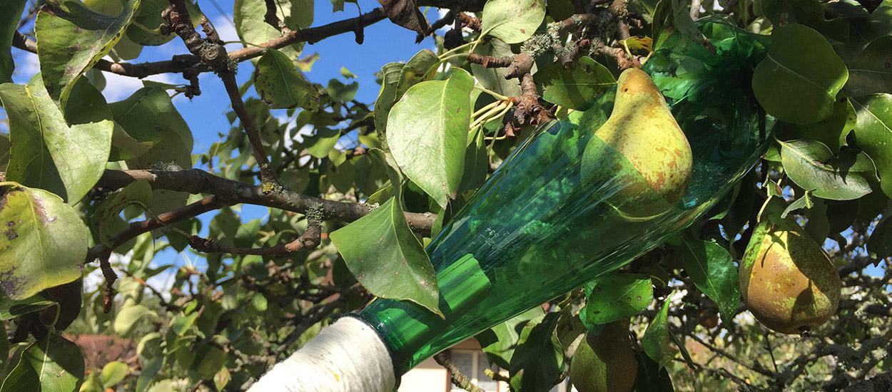 Tuto : Fabriquez une perche cueille-fruits avec des matériaux de récup'