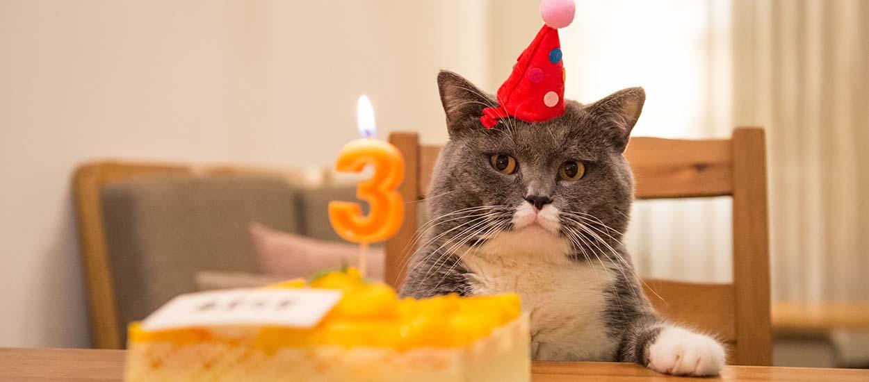 Voici la to-do list à suivre pour organiser l'anniversaire de votre chat