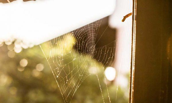 Voici 6 des espèces d'araignées qui vivent dans nos maisons (inoffensives pour l'humain)