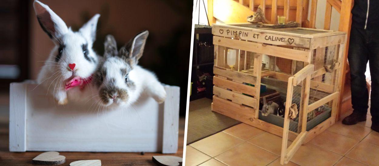 10 idées pour fabriquer une cage ou un enclos confortable pour votre lapin