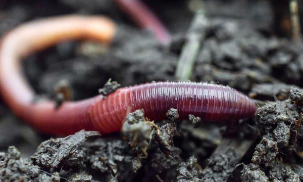 Tuto : fabriquez un aspirateur à insectes pour les observer, sans les tuer !